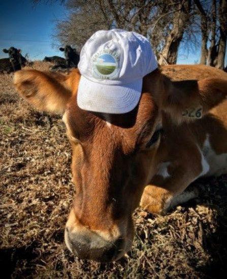 Grazing Plains Hat